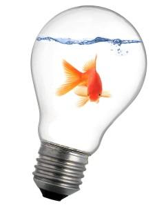 Fish_Light_02